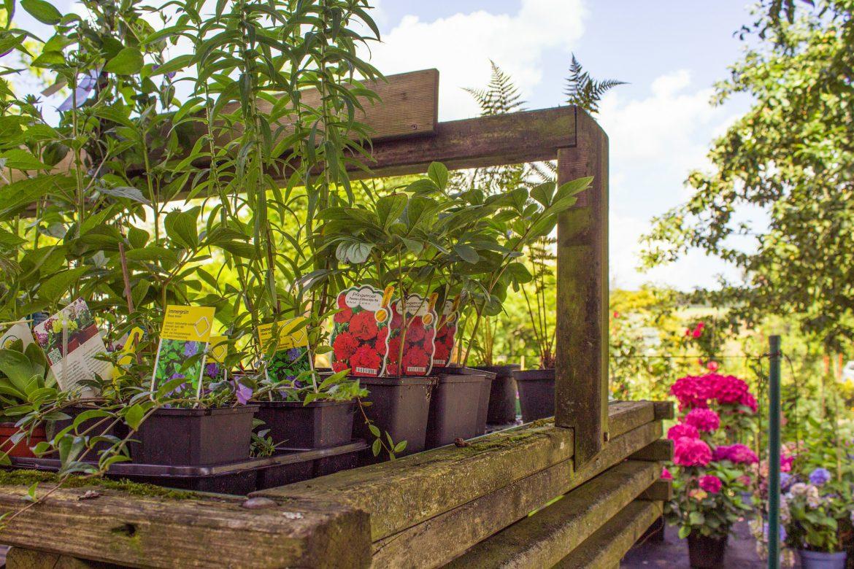garden-1557631_1920
