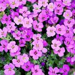 Welke tuinplanten ga ik deze zomer in mijn tuin zetten?