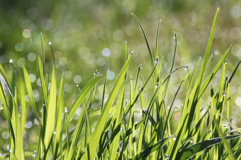 Gras aanleggen