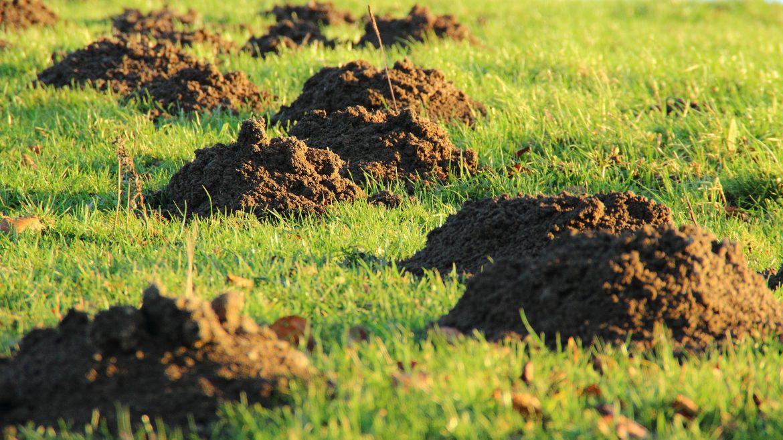 Mollen mollen uw tuin? Met Mollen Carbid kiest u voor een natuurlijke oplossing!