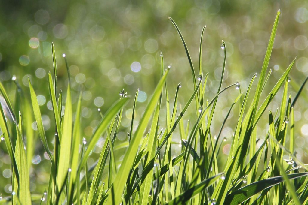 gras sproeien