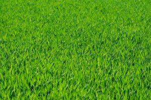 Wat zijn de voordelen van kunstgras in je tuin?