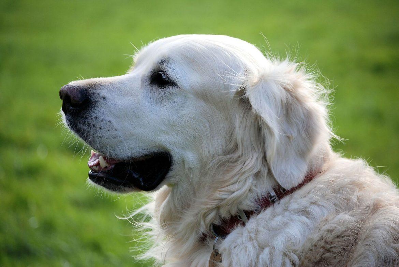 hond in jouw tuin