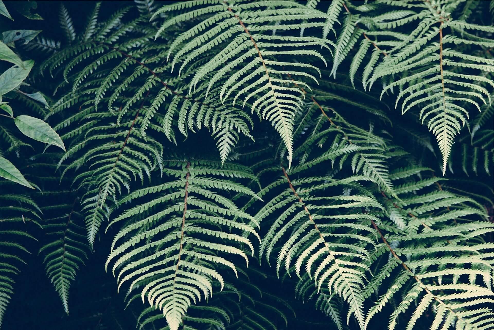 zomer-geschikte-planten