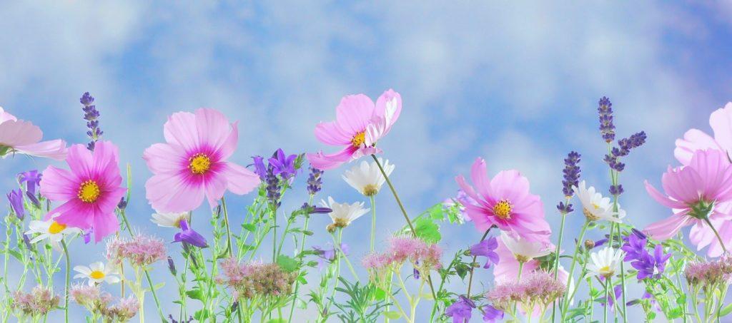 Bloemen planten tuin