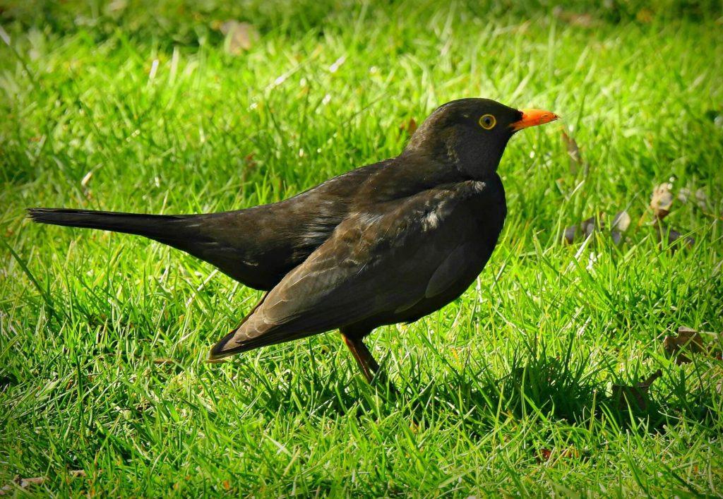 Een tuin voor vogels, die bestaat!