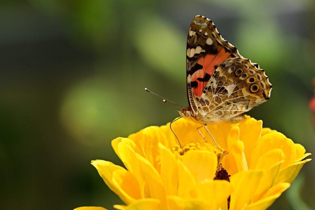 Insecten voelen zich thuis in een tuin