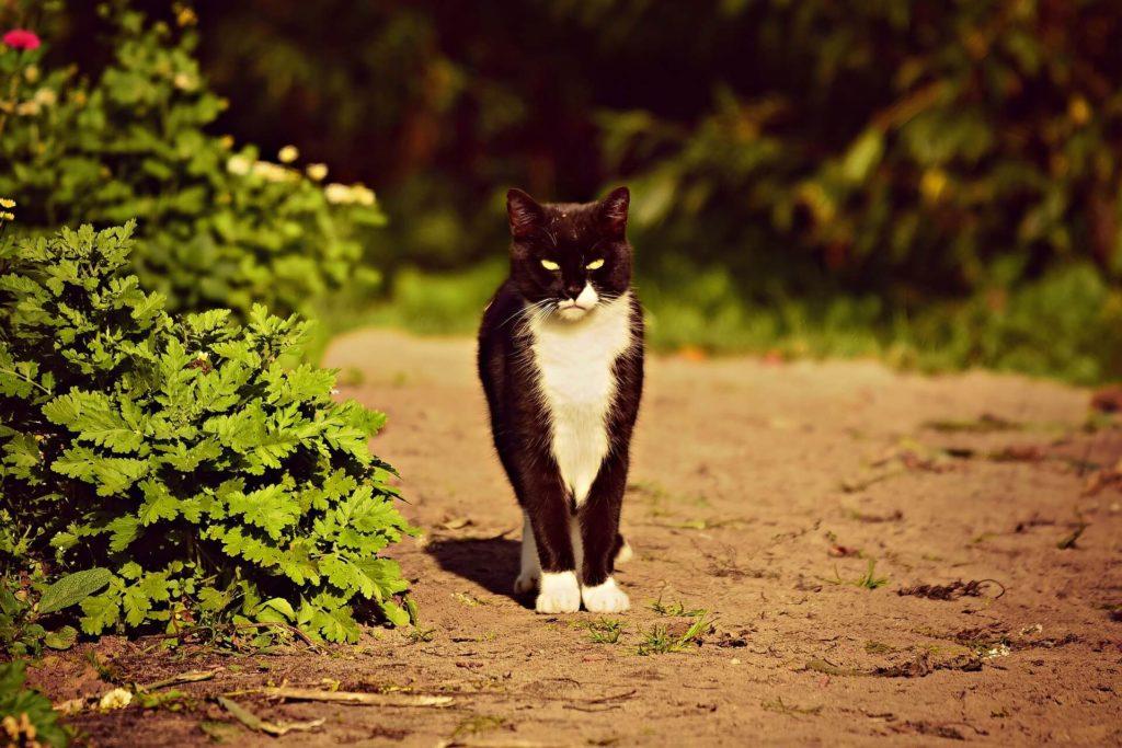 Ook tuinen zijn voor katten een fijne plek