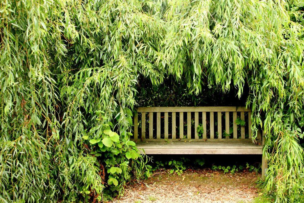 Tuin met schaduwrijk plekje